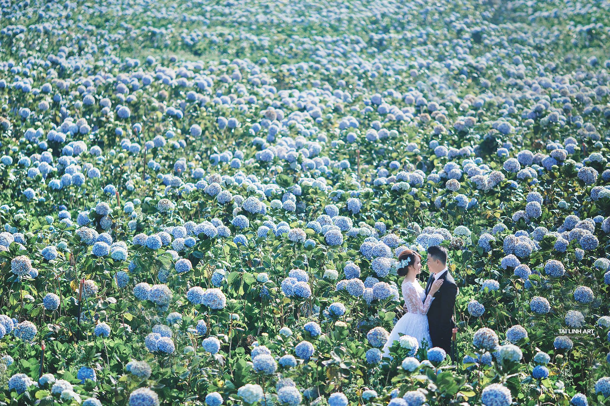 chụp ảnh cưới đà lạt , cấm tú cầu , chụp ảnh cưới bmt